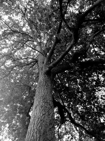 Look up Trees TreePorn Tree_collection  Branches Sunshine IPhoneography Blackandwhite