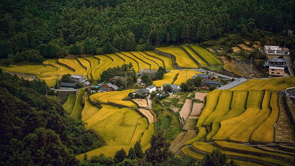 Rice Terraces In The Forest Morning Glory Shimizu area Unzen City. Nagasaki prefecture Discover Kyushu, Japan Agriculture Japan Scenery