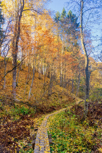 In the autumn forest. https://www.instagram.com/johnmaren/ https://www.photobymaren.com https://plus.google.com/u/0/+JohanMarengard https://www.flickr.com/photos/115763201@N02/ Autumn Tree Land Beauty In Nature Nature Tranquility Forest Tranquil Scene Scenics - Nature Non-urban Scene The Way Forward Footpath Landscape Autumn Collection WoodLand Autumn Colors Of Autumn Autumn colors