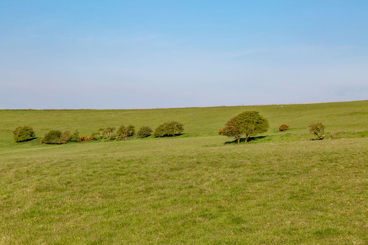 Green fields in the South Downs in Sussex, on a sunny spring morning Sussex South Downs Spring Grass Environment Sky Plant Landscape Land Tranquil Scene Field Scenics - Nature Beauty In Nature Tranquility No People Green Color Nature Day Horizon Over Land Clear Sky Outdoors
