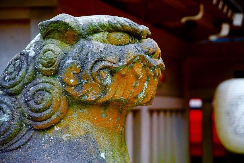 狛犬 Guardian Lion-dog At Shinto Shrine Snapshot Taking Photos Walking Around Japanese Culture