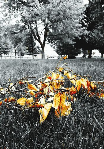 Autumn leaves have fallen No People Day Fall 2017 Focus On Foreground Nature Leaves Black & White Riverside Park Douglas Wyoming Yellow Leaves City Park