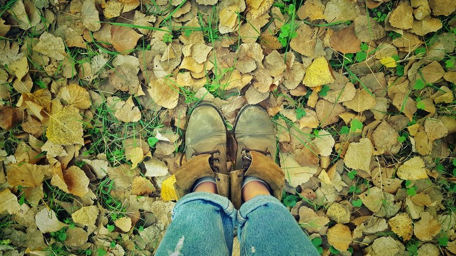 Autumn Colors Leaves Shoes