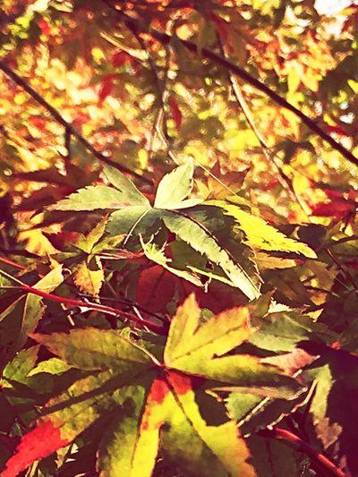 Trees 秋 🍁 At The Park Natural