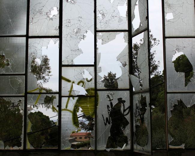 Plants against sky seen through window