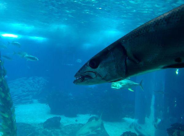 Fish Aquarium Sea Sealife Sealifeaquarium