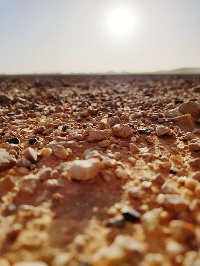 Surface level of sand