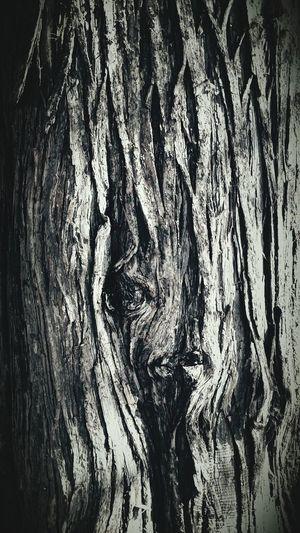 Tree Porn Scary Face Haunted? Hauntedtree