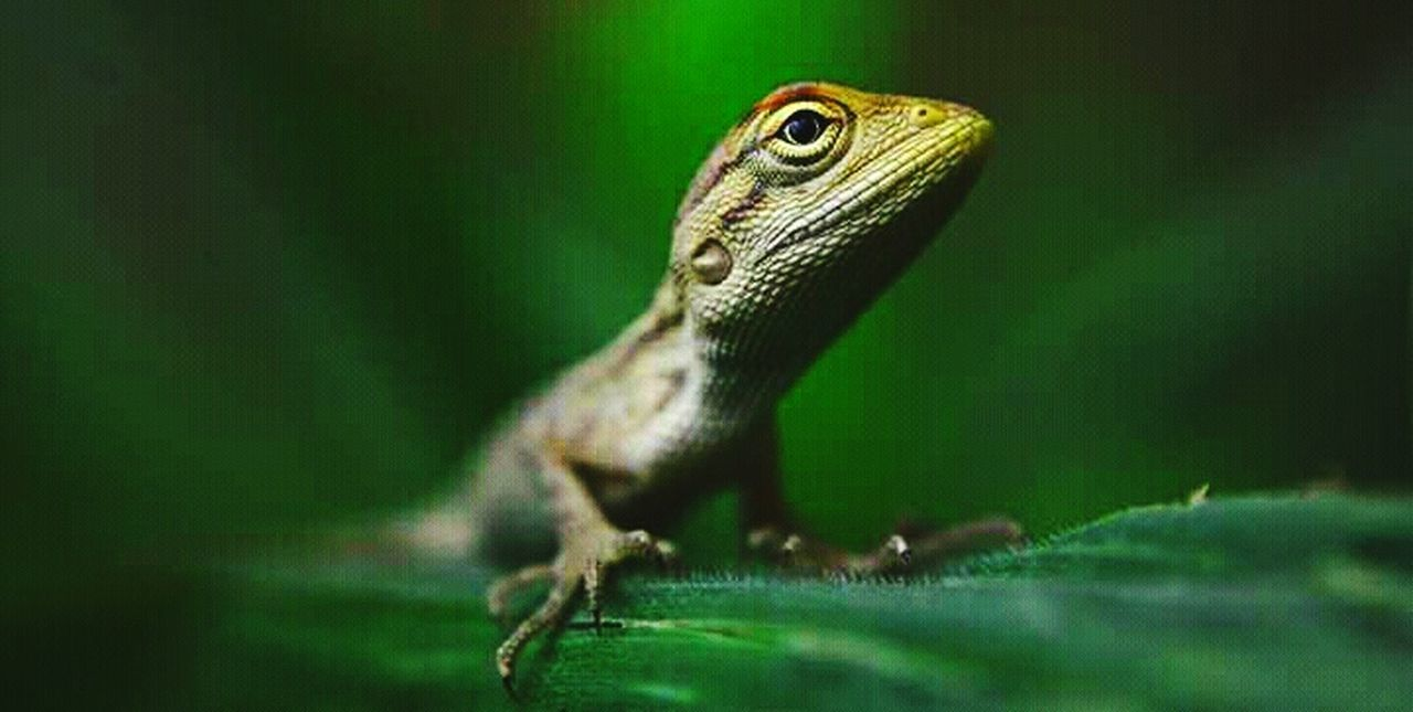 one animal, animal themes, animals in the wild, green color, animal wildlife, reptile, close-up, no people, day, nature, outdoors
