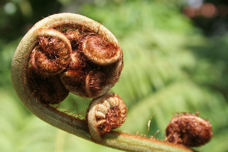 Close-up of curled up fern growing outdoors