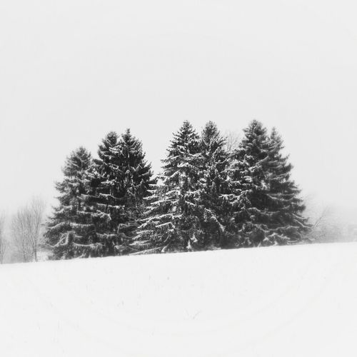 Hanging Out Blackandwhite Trees Snow Schnee Bws_worldwide Eye4photography  Ee_daily Greenthumb