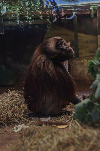 Monkey sitting on indoors