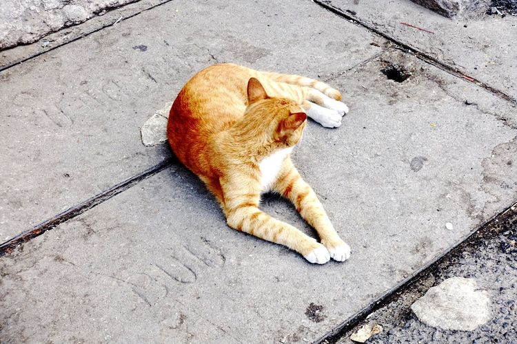 High angle view of cat resting on street