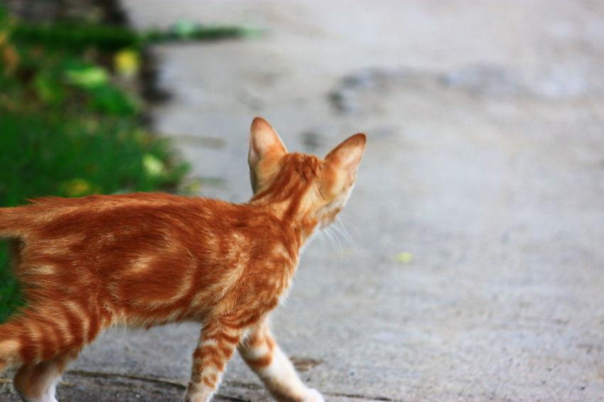 Curious Curious Cat Exploring Kitten Little Cat, Big World Orange Cat Curiosity