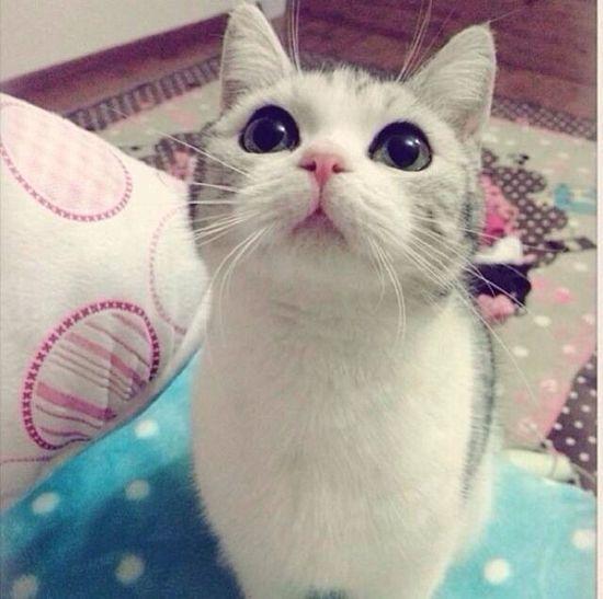 sooooo cuteeeee!!! Cat♡ Cute Pets