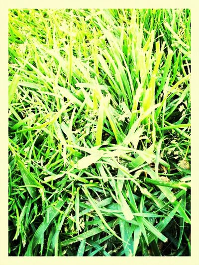 grass Grass Taking Photos Hanging Out Pantone Colors By GIZMON