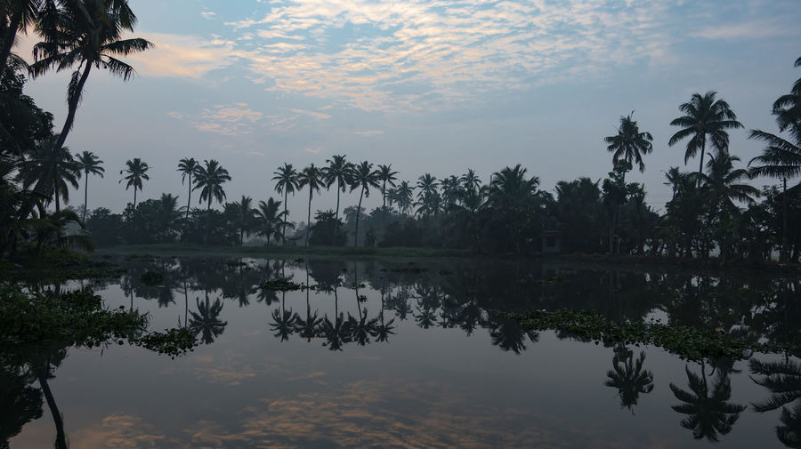 Dawn on the Meenakshi River Tree Sky Plant Reflection Tranquility Beauty In Nature Scenics - Nature Water Sunset Tranquil Scene Cloud - Sky Tropical Climate Lake Nature Palm Tree Growth No People Idyllic Waterfront Outdoors Coconut Palm Tree Reflection Lake