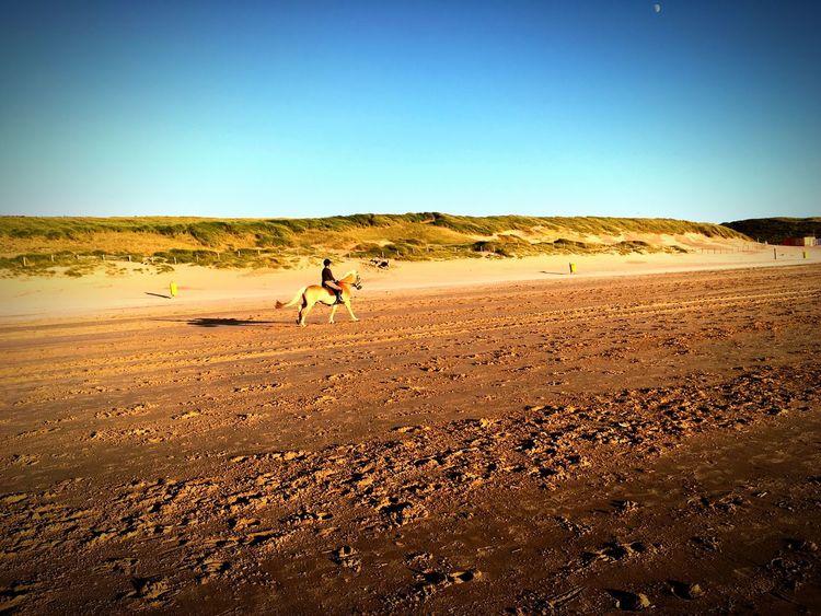 Noordwjik Beach North Sea Noordwijk Horse Sand Beach