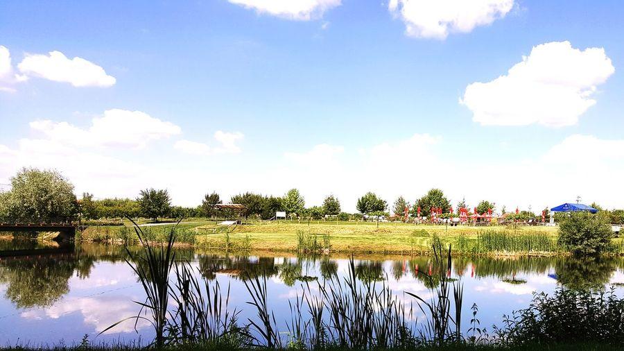 Tree Water Lake Multi Colored Reflection Sky Cloud - Sky