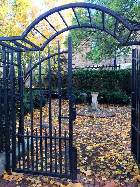 Leaves Day Architecture Metal Built Structure Nature Security No People Gate Park Park - Man Made Space Autumn Outdoors