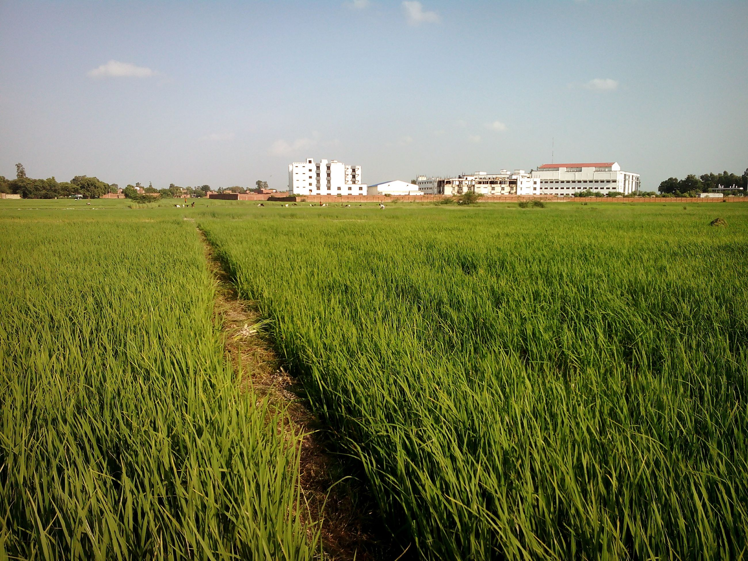 field, grass, agriculture, rural scene, green color, farm, building exterior, growth, architecture, landscape, built structure, crop, sky, grassy, cultivated land, nature, tranquility, tranquil scene, beauty in nature, scenics