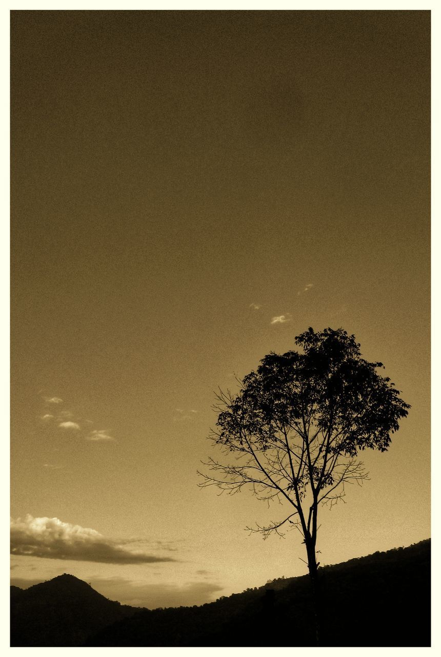 sky, tree, plant, beauty in nature, tranquility, scenics - nature, tranquil scene, environment, silhouette, landscape, transfer print, nature, auto post production filter, no people, land, field, sunset, bare tree, cloud - sky, outdoors