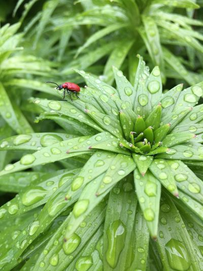 Red Bug Green Color Drop Water Leaf Growth Plant Part Plant Insect Wet Animals In The Wild Beauty In Nature Outdoors