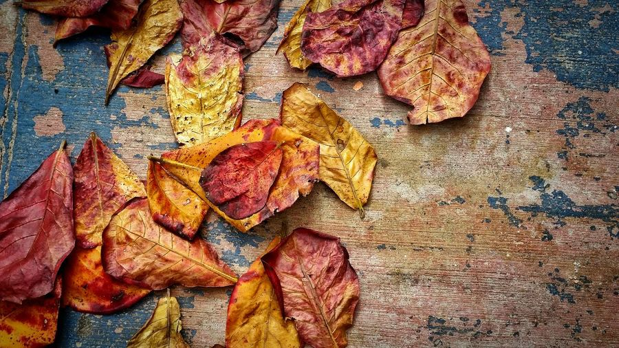 Textured  Backgrounds Aging Process Full Frame Close-up Deterioration Rough Weathered Damaged Outdoors Nature History Natural Condition Eroded No People Multi Colored Leaves