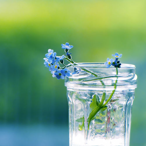 Forget-me-nots. Nature Still Life Photography Beauty In Nature Blue Blue Flower Blue Flowers Close Up Close-up Drinking Glass Flower Focus On Foreground Forget Me Not Forget Me Nots Forget-me-not Fragility Freshness Green Color Jar Nature Nature_collection No People Plant Still Life