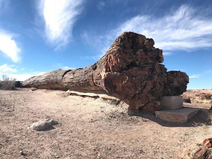 Petrified Tree,