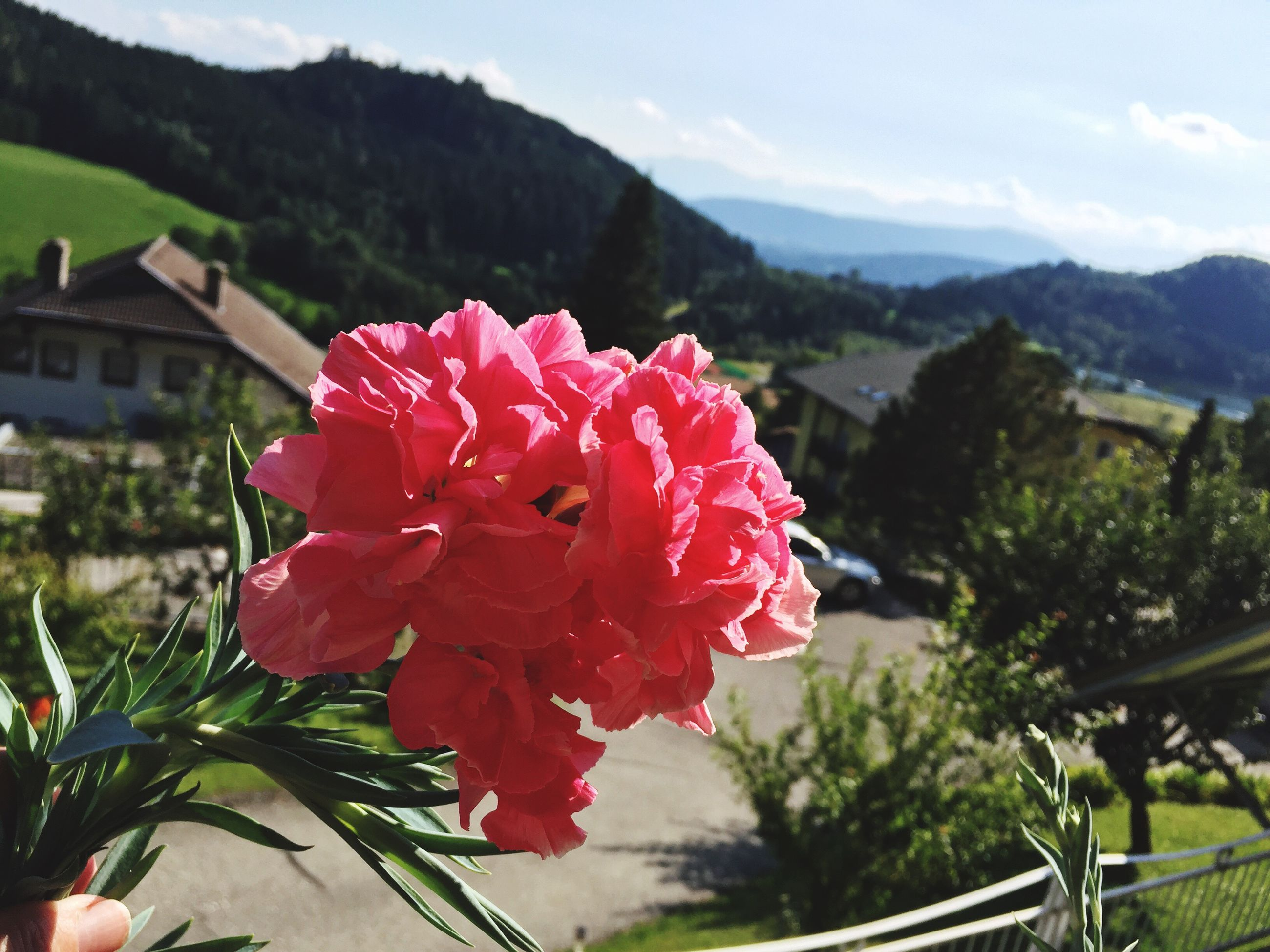 flower, mountain, fragility, freshness, beauty in nature, growth, close-up, petal, nature, focus on foreground, pink color, flower head, mountain range, plant, scenics, in bloom, springtime, rose - flower, sky, blossom, day, outdoors, blooming, tranquility, red, botany, rose, softness, green color