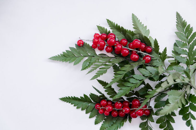 Red berries growing on plant against white background