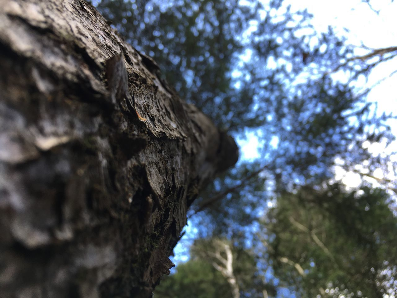 tree, tree trunk, low angle view, textured, nature, day, focus on foreground, no people, outdoors, growth, sky, close-up, beauty in nature
