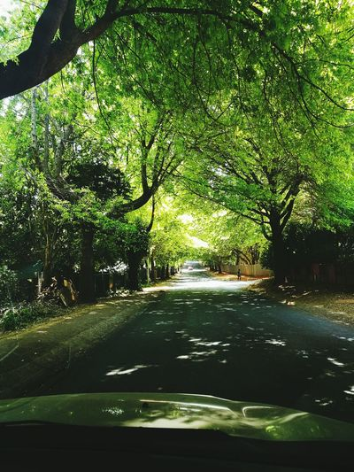 Battle Of The Cities South Africa Randburg The Best City In The World Road Covered With Trees Car Point Of View Nature Majestic Outdoors The Drive