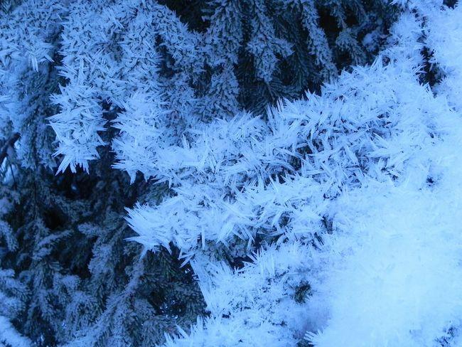 Snow ❄ Ice Trees Winter