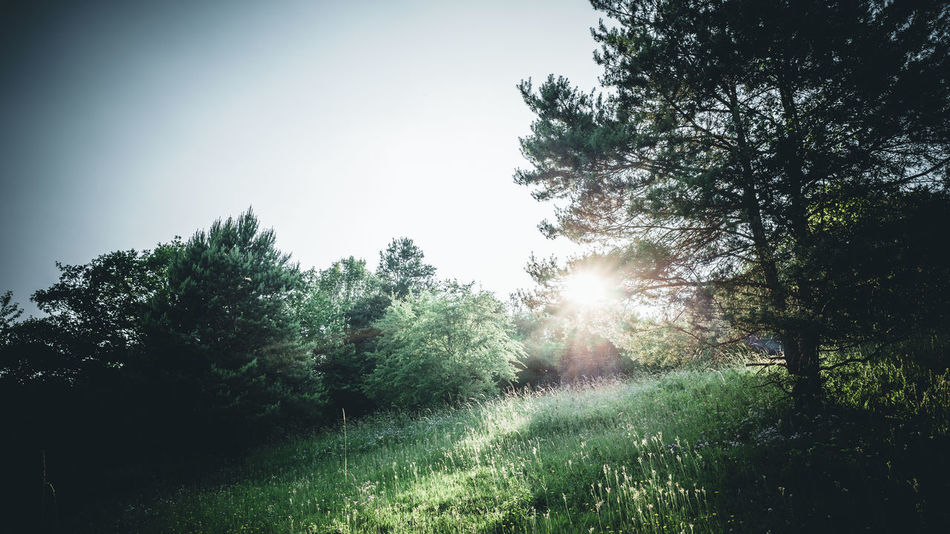 Evening Hike Bäume Gegenlicht Hiking Landschaft Nature Tauber Valley Beauty In Nature Day Growth Landscape Lens Flare Nature No People Non-urban Scene Outdoors Plant Sky Sonne Sun Sunbeam Sunlight Taubertal Tranquil Scene Tranquility Tree