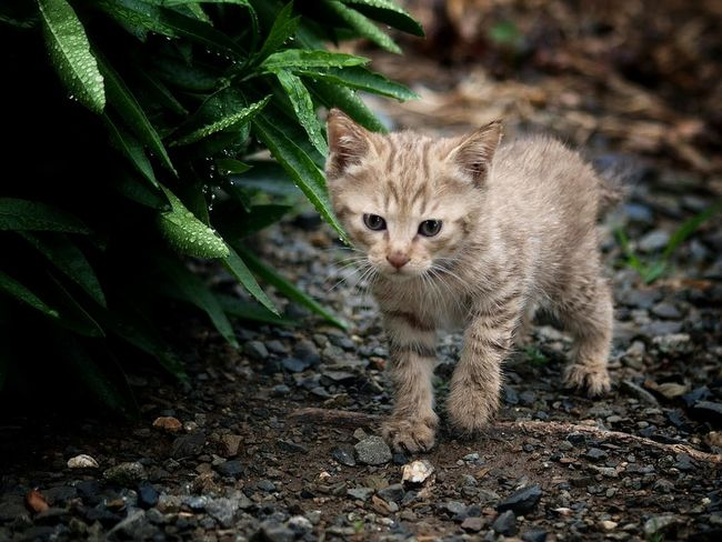 Kitten Cat Chat Stray Cat Cat Lovers EyeEm Nature Lover Catoftheday Animals Lovely