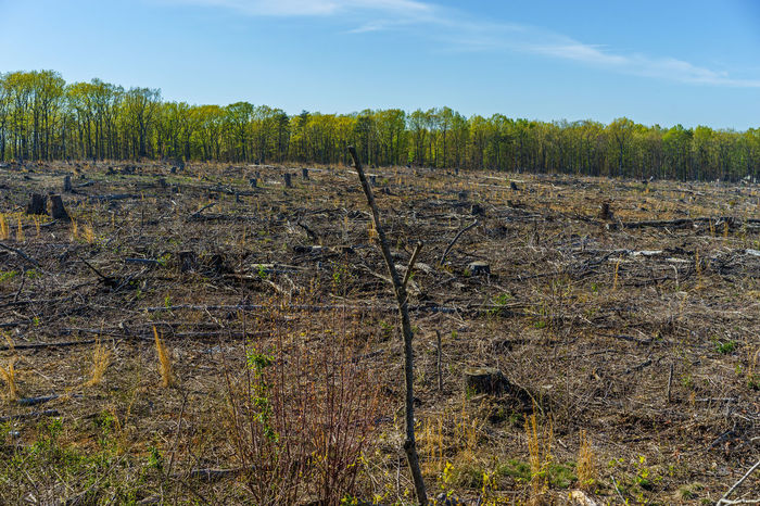 Climate Change Day Deforestation Field Forest Fracking Global Warming Global Warming Effect Grass Growth Landscape Mankind Nature No People Non-urban Scene Outdoors Plant Scenics Sky Telling Stories Differently Virginia Wood Environment Sustainability Human Meets Technology