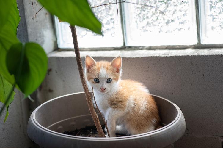 Portrait of cat by window