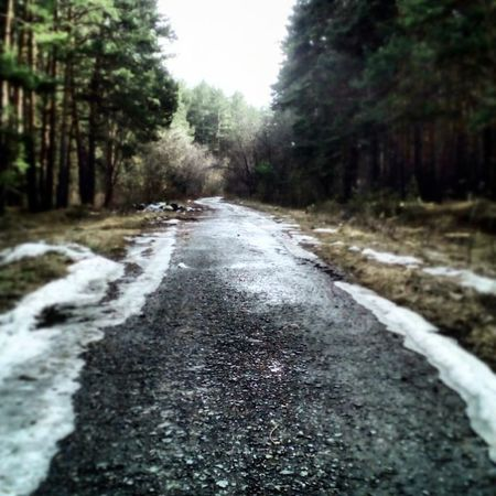 Forest Photo Beautifl Nature Russia Spring это_Россия_детка это_россия Лес снег
