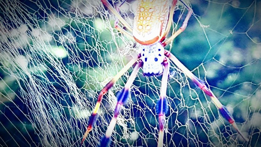 Spider Web Web Spider Nature Insect Outdoors No People Fragility Hanging Beauty In Nature Spider Eyes Close-up Day Spider Beauty In Nature Nature