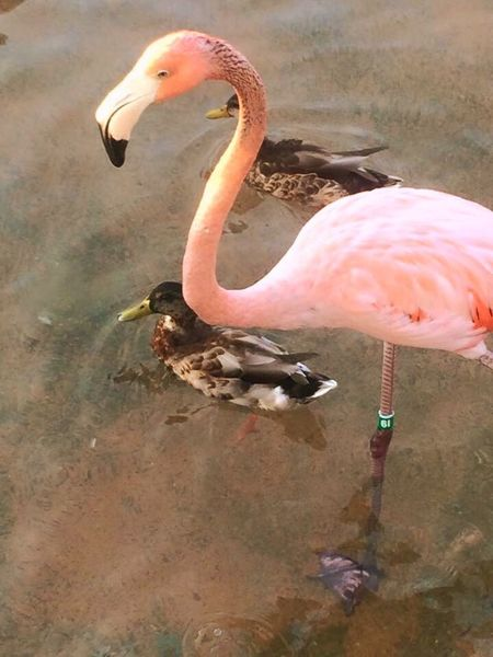Flamingos Standing On One Leg Flamingos Up Close EyeEm Nature Lover EyeEm Best Shots
