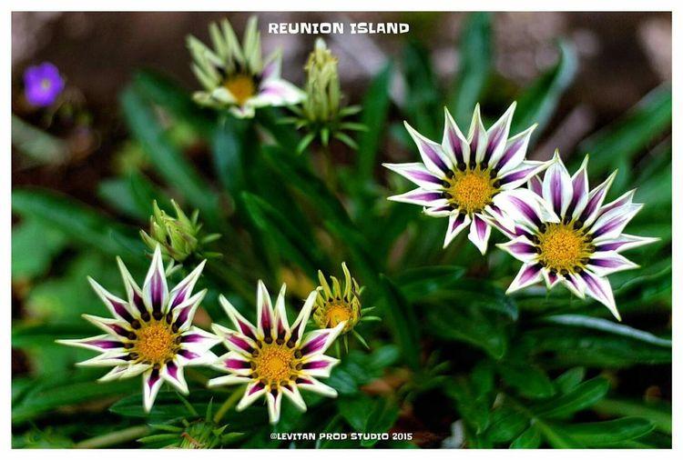Hanging Out Taking Photos Hello World Enjoying Life ST DENIS Reunion Island Flowers