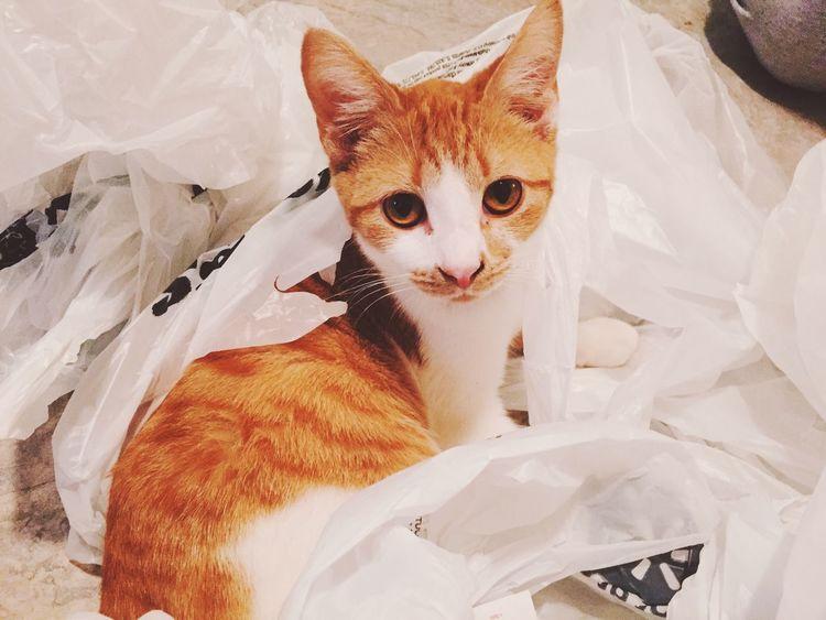 Cat Saber Kitten