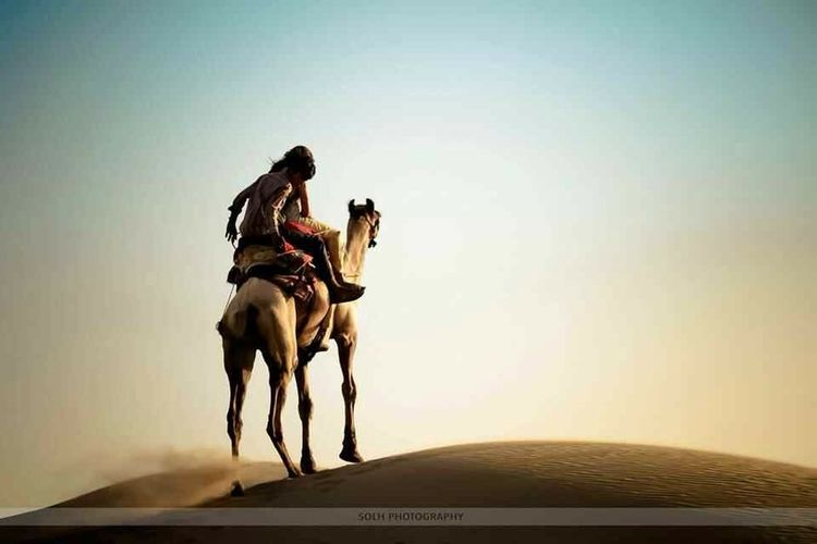 RePicture Travel Desert Travel Photography Camel