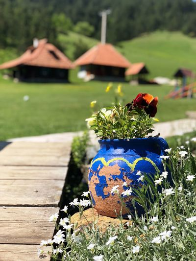 Zlatibor Etnostyle Ethno Mountain Focus On Foreground Day Plant Nature No People Growth Park Green Color Grass Flower Outdoors Flowering Plant