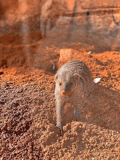 Portrait of lizard on rock