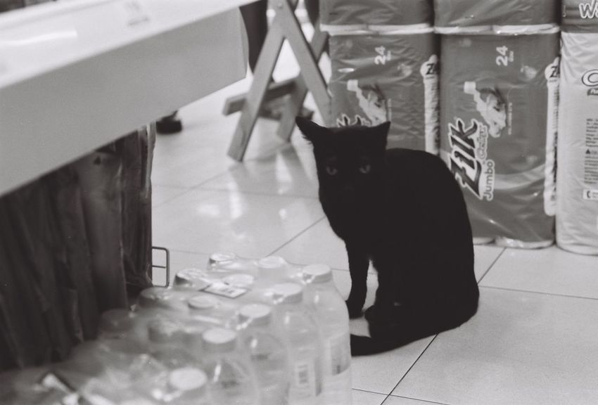Cat in Mart . . . Nikon FM2 | Fuji Acros 100 | Nikkor 50mm 1.8 D Film Develop : I Trying (D76X 1:1) Process and Scan : Positive Lab+ by Neno Camera . . . Domestic Cat Pets Animal Themes Domestic Animals Blackandwhite One Animal Indoors  Cat Mammal No People Sitting Day Acros100 Fujifilm Thailand Bangkok Film Film Photography Filmisnotdead Filmcamera Nikon Nikkor Fm2 Photography EyeEm