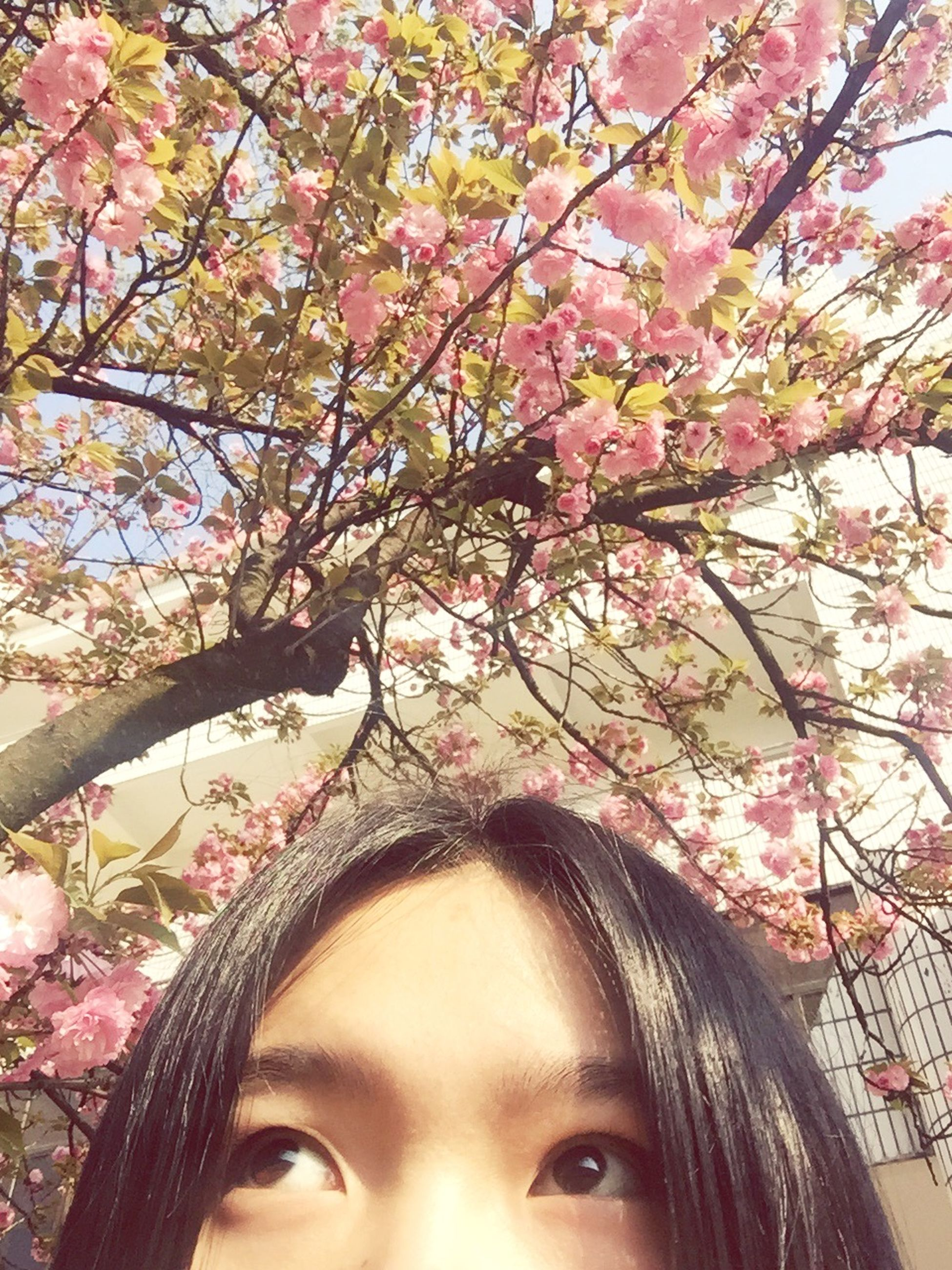 tree, flower, branch, pink color, low angle view, growth, nature, young adult, day, lifestyles, outdoors, beauty in nature, cherry blossom, cherry tree, close-up, young women, person, leisure activity