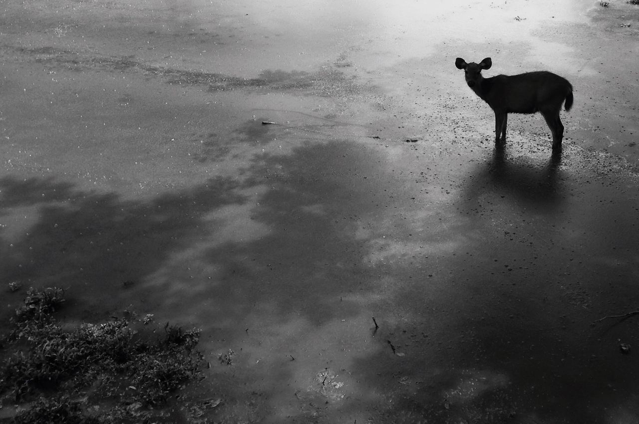 DOGS STANDING IN WATER